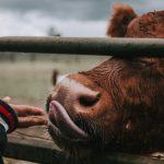 El mito sobre la proteína y el consumo de animales